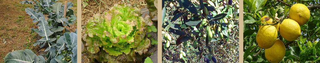 coltivazione bio